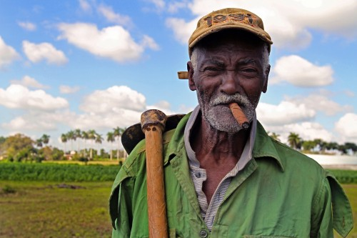 A life time spent growing Cuba's famed tobacco.